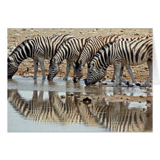 Africa, Namibia, Etosha NP. Burchell's Zebra Card