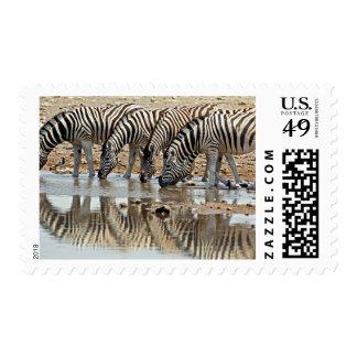 Africa, Namibia, Etosha NP. Burchell's Zebra Postage Stamps