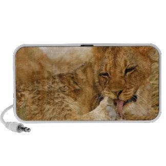 Africa, Namibia, Etosha NP. Lion Panthera iPod Speaker