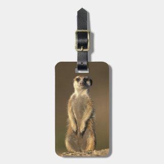 Africa, Namibia, Keetmanshoop, Meerkat (Suricate Bag Tag
