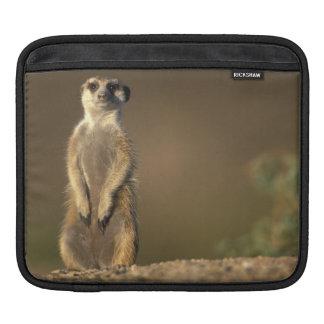 Africa, Namibia, Keetmanshoop, Meerkat (Suricate iPad Sleeve