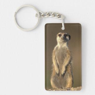 Africa, Namibia, Keetmanshoop, Meerkat (Suricate Keychain