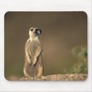 Africa, Namibia, Keetmanshoop, Meerkat (Suricate Mouse Pad