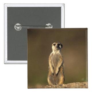 Africa, Namibia, Keetmanshoop, Meerkat (Suricate Pinback Button