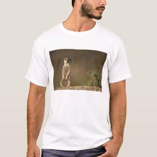 Africa, Namibia, Keetmanshoop, Meerkat (Suricate T-Shirt
