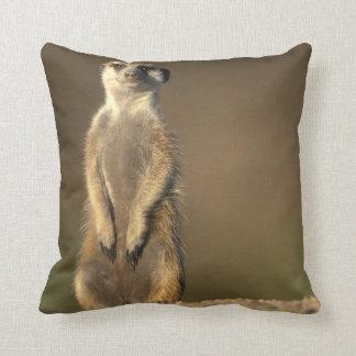 Africa, Namibia, Keetmanshoop, Meerkat (Suricate Throw Pillow