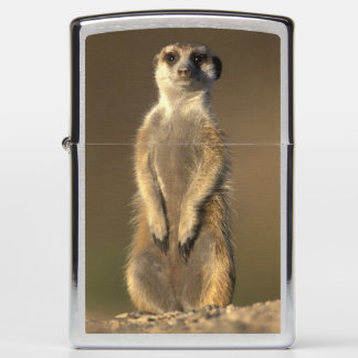 Africa, Namibia, Keetmanshoop, Meerkat (Suricate Zippo Lighter