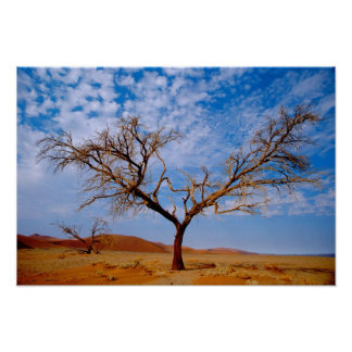 Africa, Namibia, Naukluft National Park, Poster