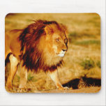 África, Namibia, Okonjima. León masculino solitari Alfombrillas De Raton
