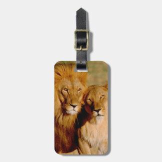África, Namibia, Okonjima. León y leona Etiquetas Para Equipaje