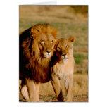 África, Namibia, Okonjima. León y leona Felicitacion