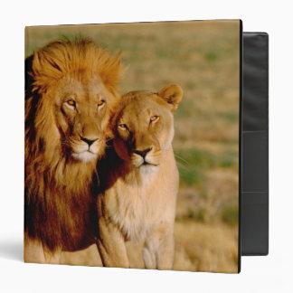 Africa, Namibia, Okonjima. Lion & lioness Binders