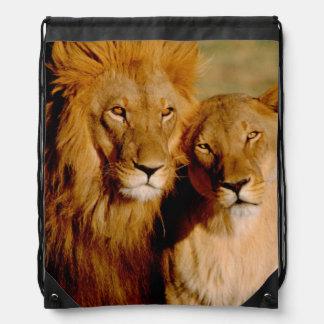 Africa, Namibia, Okonjima. Lion & lioness Drawstring Backpack