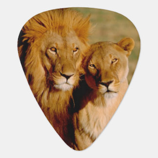 Africa, Namibia, Okonjima. Lion & lioness Guitar Pick