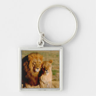 Africa, Namibia, Okonjima. Lion & lioness Keychain