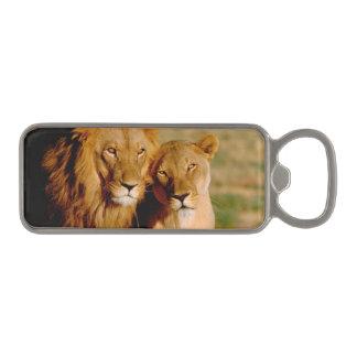 Africa, Namibia, Okonjima. Lion & lioness Magnetic Bottle Opener