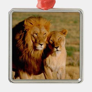 Africa, Namibia, Okonjima. Lion & lioness Metal Ornament