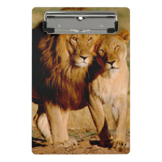 Africa, Namibia, Okonjima. Lion & lioness Mini Clipboard