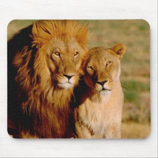 Africa, Namibia, Okonjima. Lion & lioness Mouse Pad