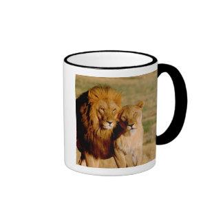 Africa, Namibia, Okonjima. Lion & lioness Ringer Coffee Mug