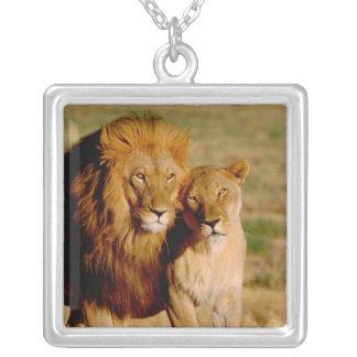 Africa, Namibia, Okonjima. Lion & lioness Square Pendant Necklace