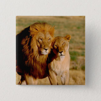 Africa, Namibia, Okonjima. Lion & lioness Pinback Button