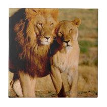 Africa, Namibia, Okonjima. Lion & lioness Tile