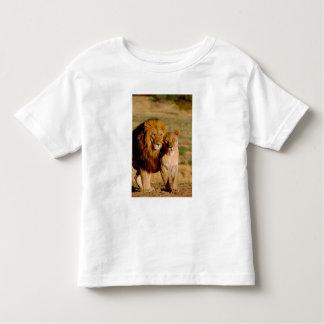 Africa, Namibia, Okonjima. Lion & lioness Toddler T-shirt