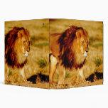 Africa, Namibia, Okonjima. Lone male lion. Vinyl Binder