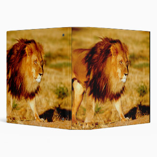 Africa, Namibia, Okonjima. Lone male lion. Binder