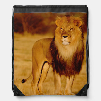 Africa, Namibia, Okonjima. Lone male lion Drawstring Bag