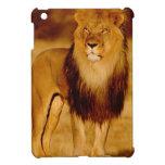 Africa, Namibia, Okonjima. Lone male lion Cover For The iPad Mini