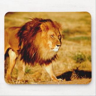 Africa, Namibia, Okonjima. Lone male lion. Mouse Pad