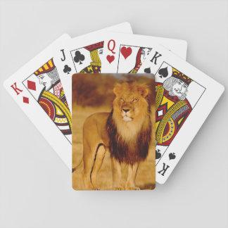 Africa, Namibia, Okonjima. Lone male lion Playing Cards