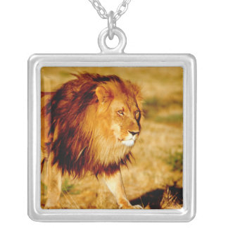 Africa, Namibia, Okonjima. Lone male lion. Silver Plated Necklace