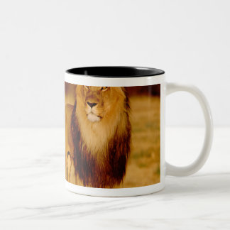 Africa, Namibia, Okonjima. Lone male lion Two-Tone Coffee Mug