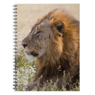 África, Namibia, parque nacional 2 de Etosha Libreta Espiral