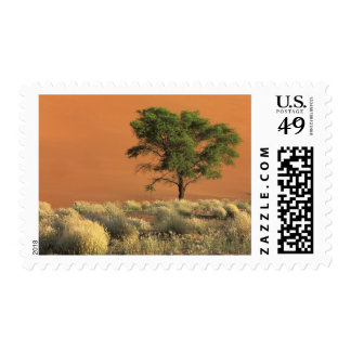 África, Namibia, parque nacional de Namib, Franqueo