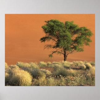 África, Namibia, parque nacional de Namib, Sossusv Posters