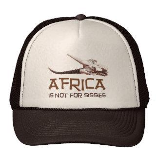 África no está para las mariquitas él es el conti gorro