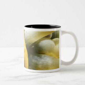 Africa, Red Sea. Twoband Anemonefish Two-Tone Coffee Mug
