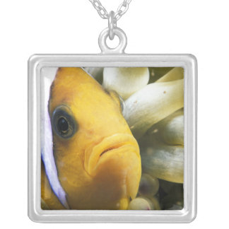 Africa, Red Sea. Twoband Anemonefish Square Pendant Necklace