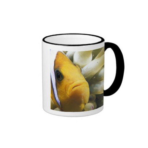 Africa, Red Sea. Twoband Anemonefish Ringer Mug