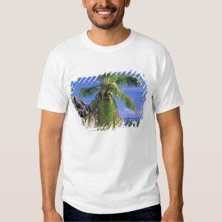 África, Seychelles, isla de Digue del La. Granito Camisas