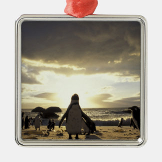 Africa, South Africa Black-footed penguins Christmas Tree Ornaments