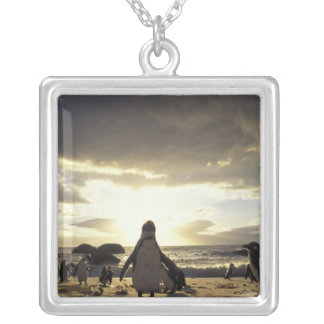 Africa, South Africa Black-footed penguins Square Pendant Necklace