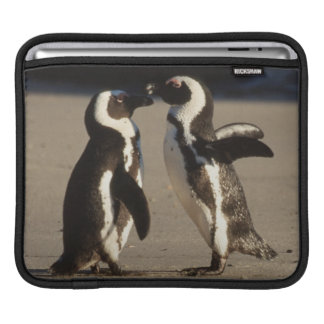 Africa, South Africa, Capetown area Jackass iPad Sleeve