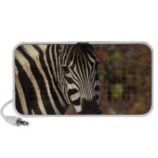 Africa, South Africa, Kruger NP Zebra portrait Portable Speakers