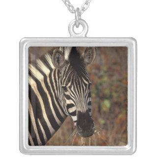 Africa, South Africa, Kruger NP Zebra portrait Square Pendant Necklace
