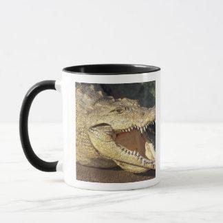 Africa, South Africa Nile crocodile Mug